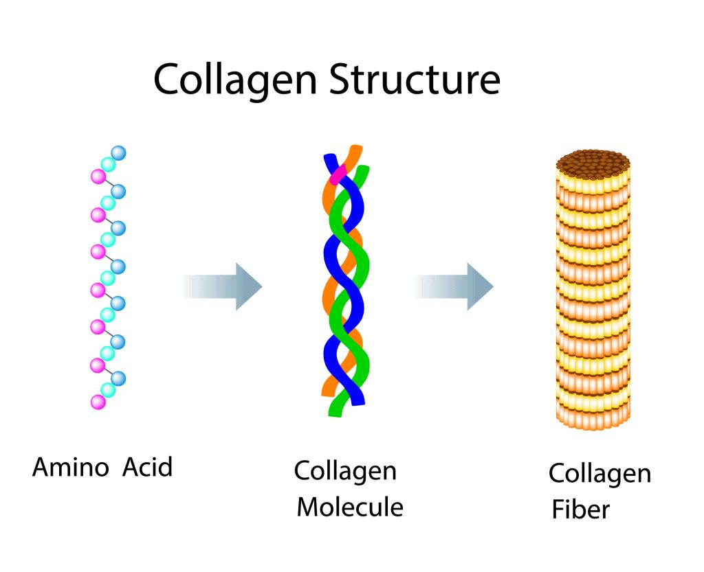 wat is collageen - eiwit structuur
